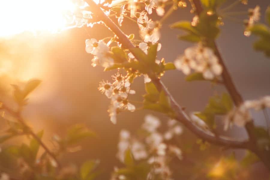 proljetni ekvinocij