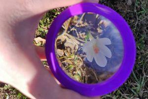 Proljetni praznici u prirodi
